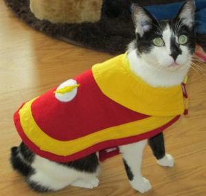 flashcoat