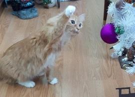 Cat Ornaments 3-2