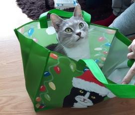 Cat Ornaments 4-2