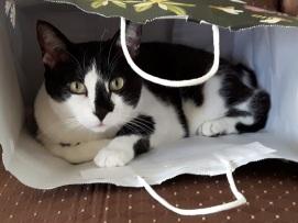 Cat Ornaments 5-2